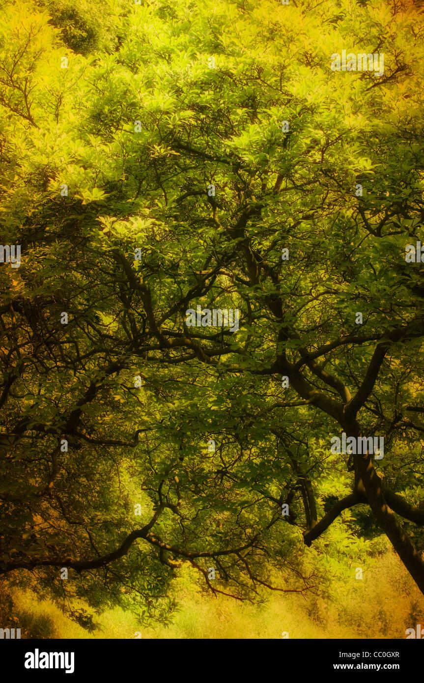 Enchanting tree - Stock Image