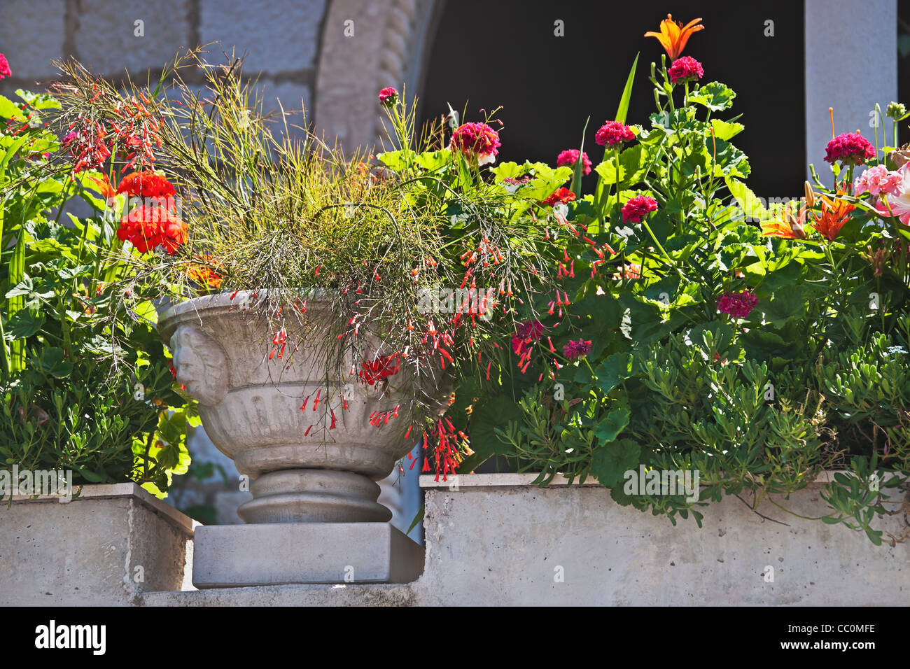 Flowers on a balcony in the old town of Dubrovnik, Dalmatia, Croatia, Europe Stock Photo