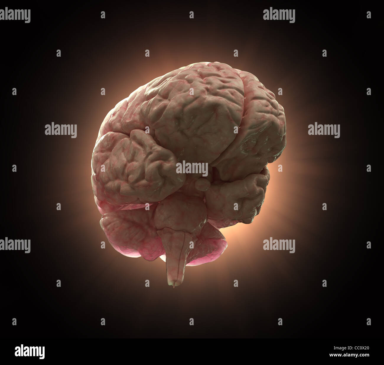 Glowing human brain on a black background - intelligence and creativity concept illustration - Stock Image