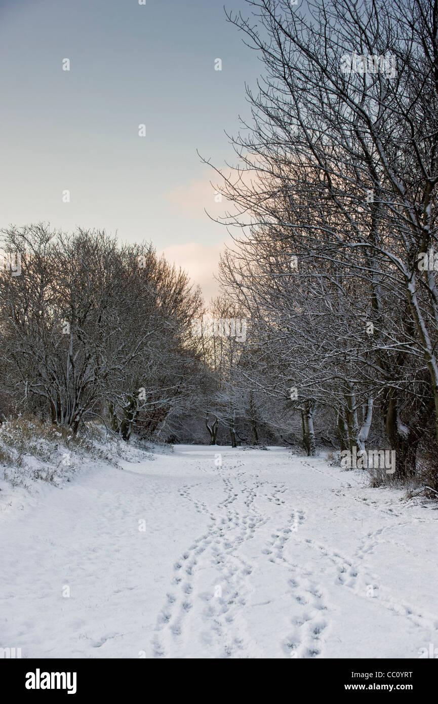 footprints in snow, river bank, York - Stock Image