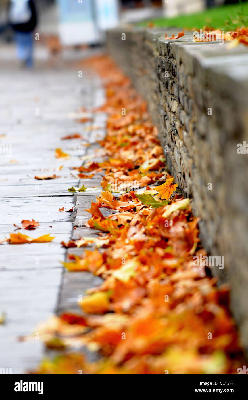 Yellow brown leaves in Autumn Fall next to a grey stone wall in Vauxhall London England Stock Photo