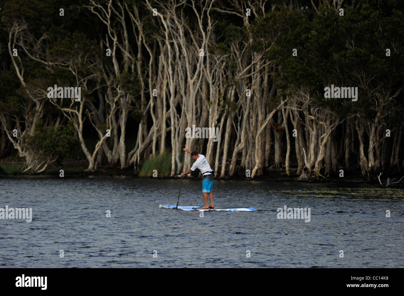A man paddles a paddle board on a freshwater lake with Paperbark forest behind. Stock Photo