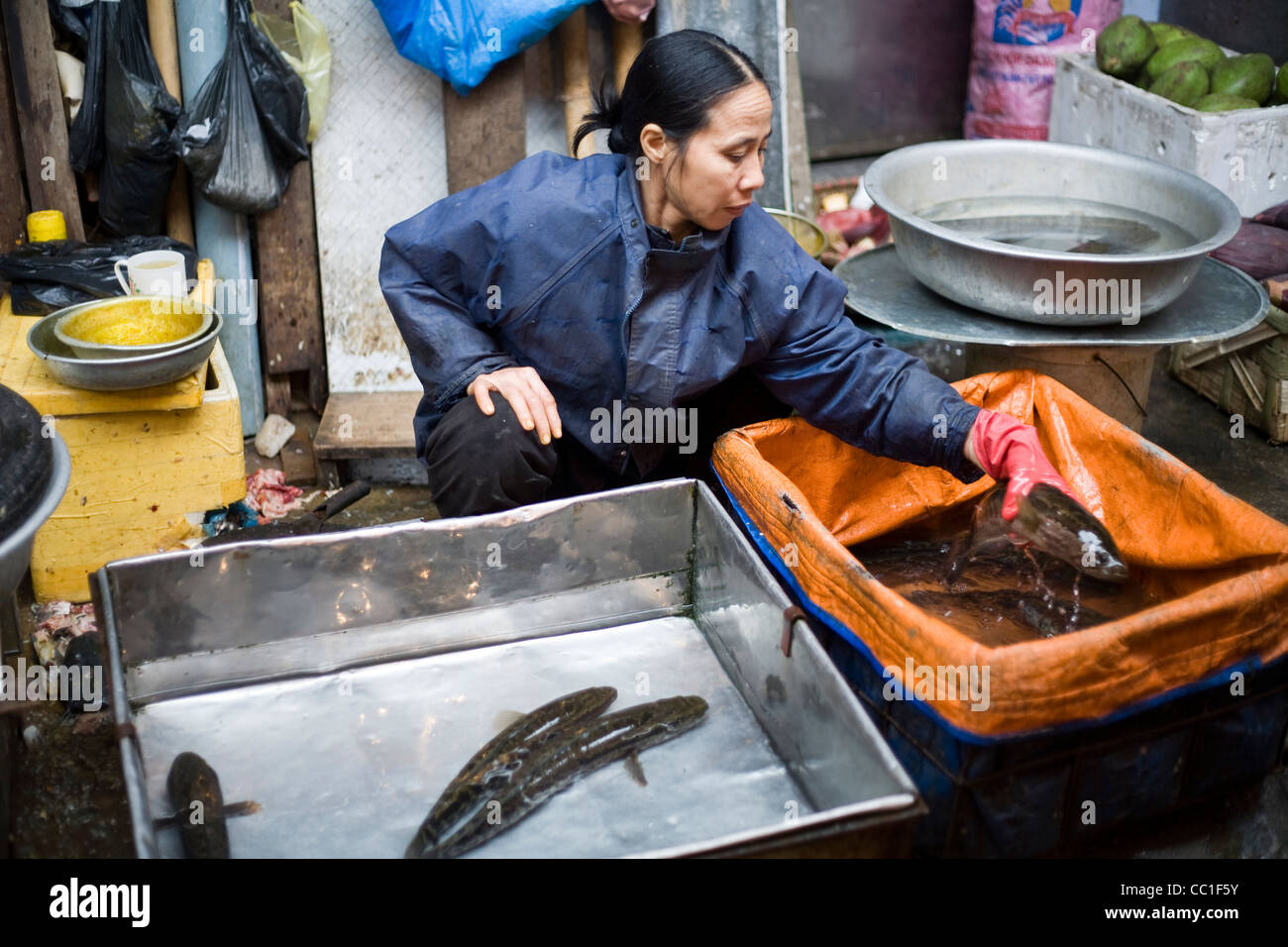 A woman picks up a fish in a tank of water on her stall in the Cau Go Market, Hanoi, Vietnam - Stock Image