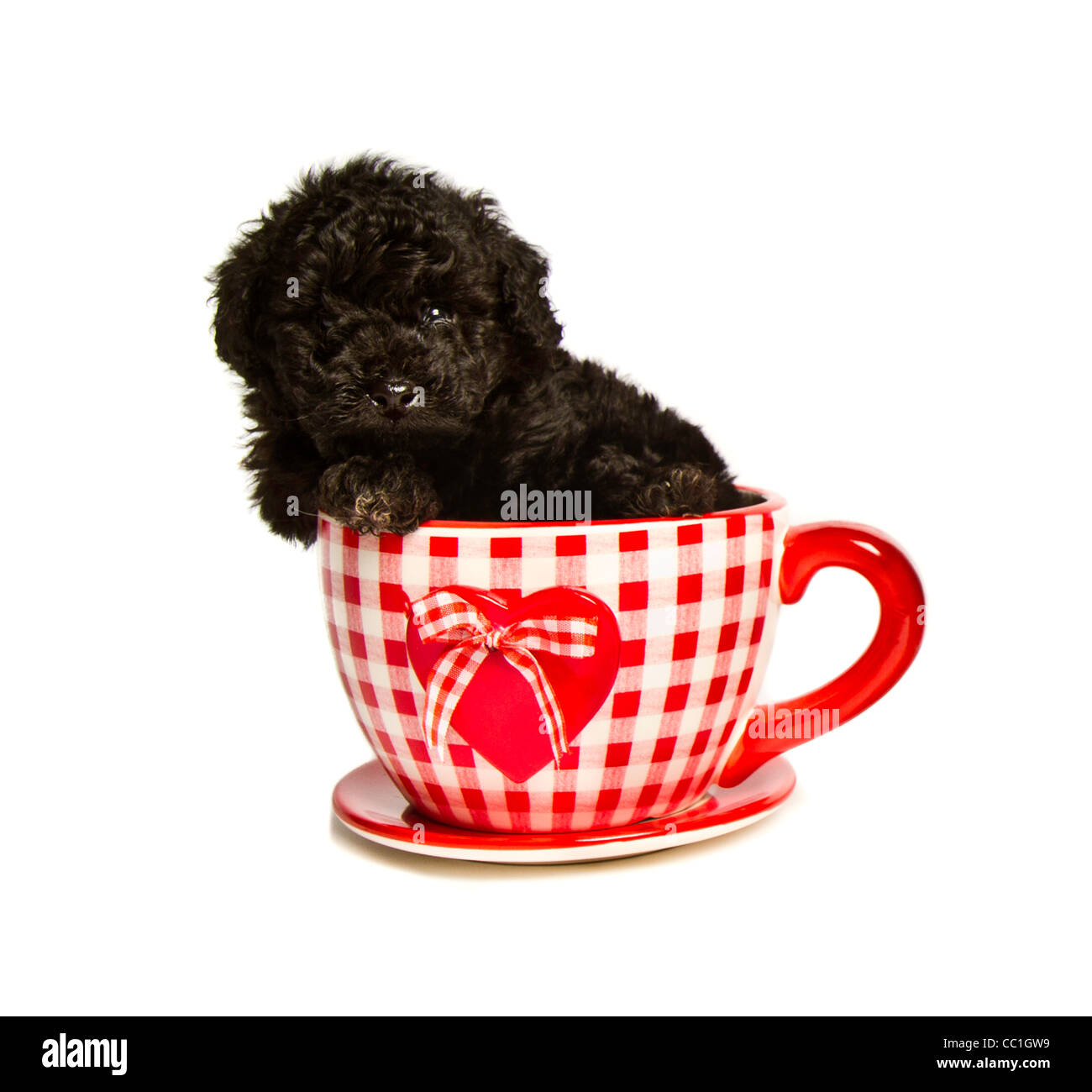 Black Toy Poodles Puppies In Teacups With Hearts Stock Photo Alamy