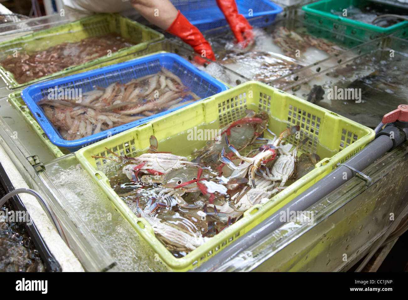 live crabs and shellfish for sale in tanks in yau ma tei indoor food market kowloon hong kong hksar china asia - Stock Image