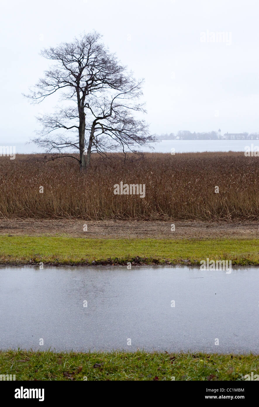 Vertical image of a leafless tree on a rainy day in fields of brown grass, a stream in the foreground, a lake in - Stock Image