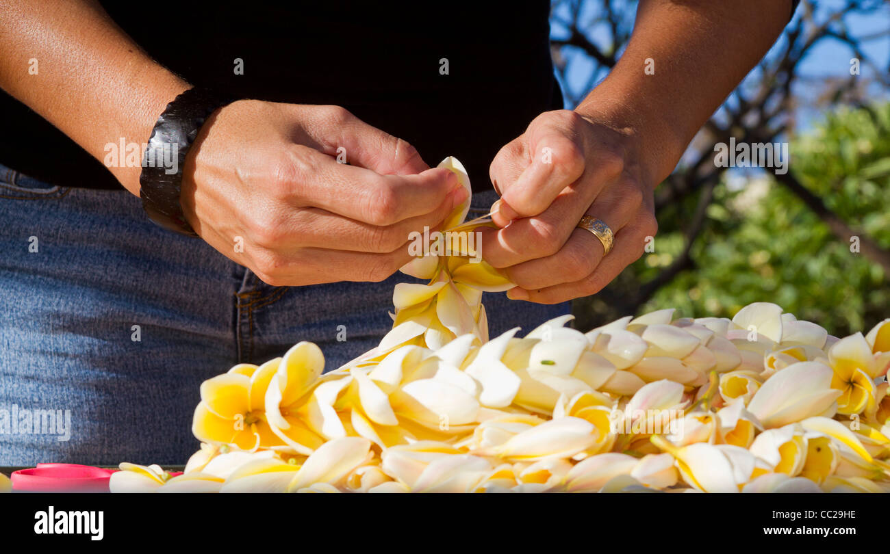 Learning how to string a lei with plumeria flowers on Molokai, Hawaii, USA. Stock Photo