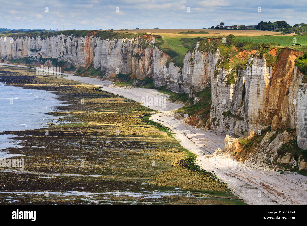 Cliffs near Etretat and Fecamp, Normandy, France - Stock Image