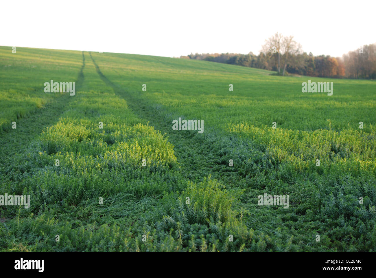 Track Marks High Resolution Stock Photography and Images - Alamy