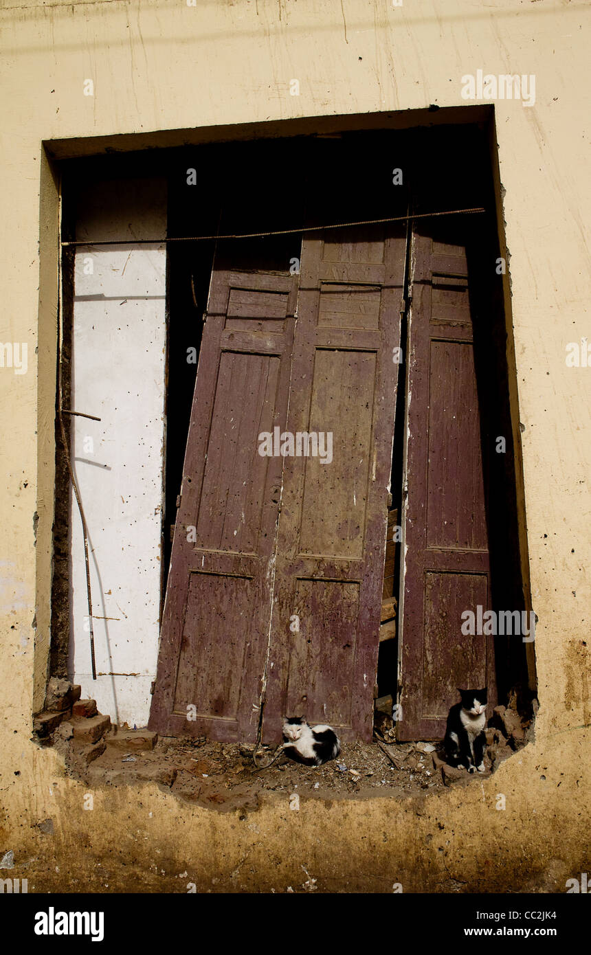 Derelict wooden doors with cats, Luxor Town, Egypt - Stock Image