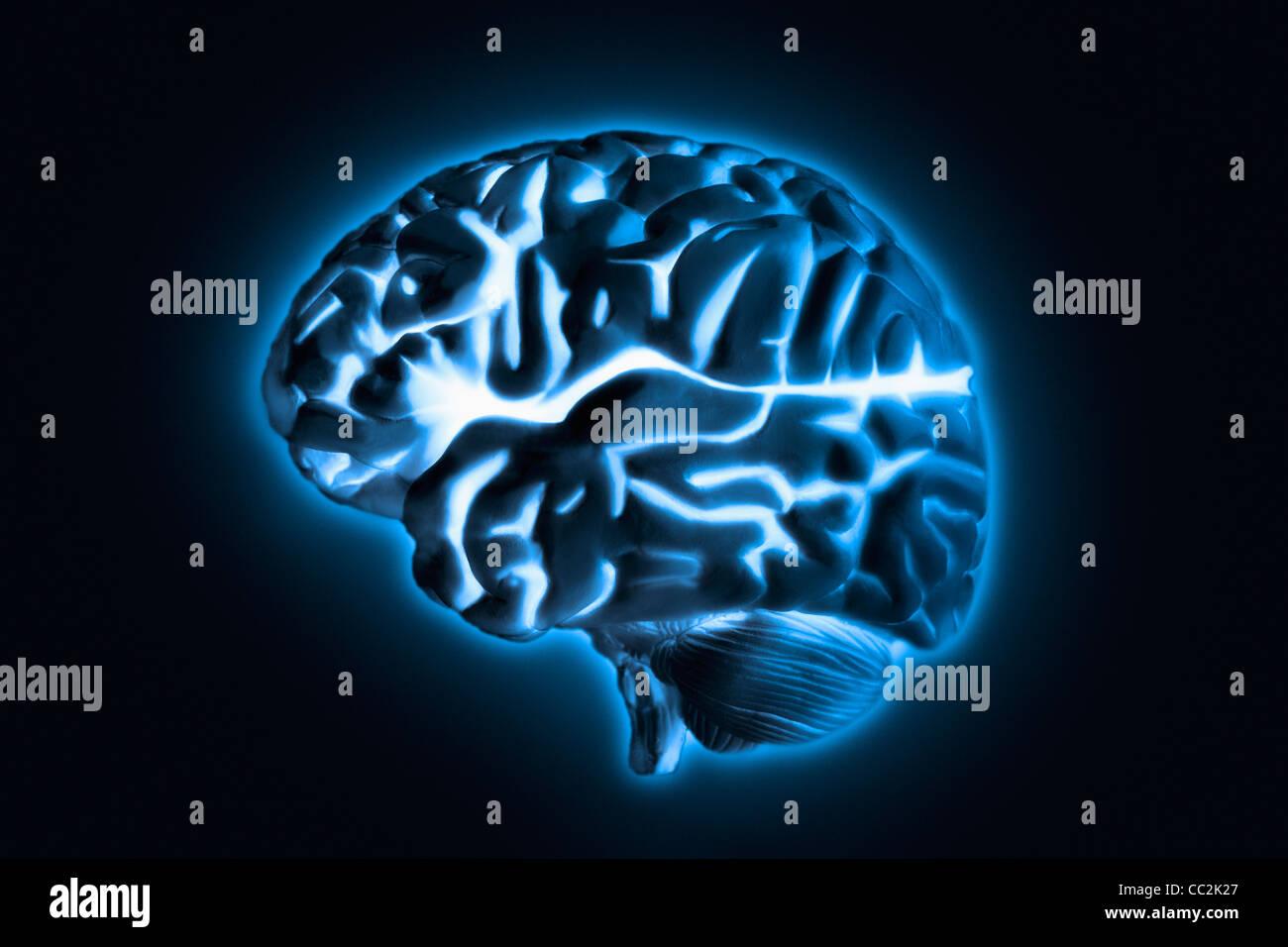 Human brain model with blue glow, studio shot - Stock Image