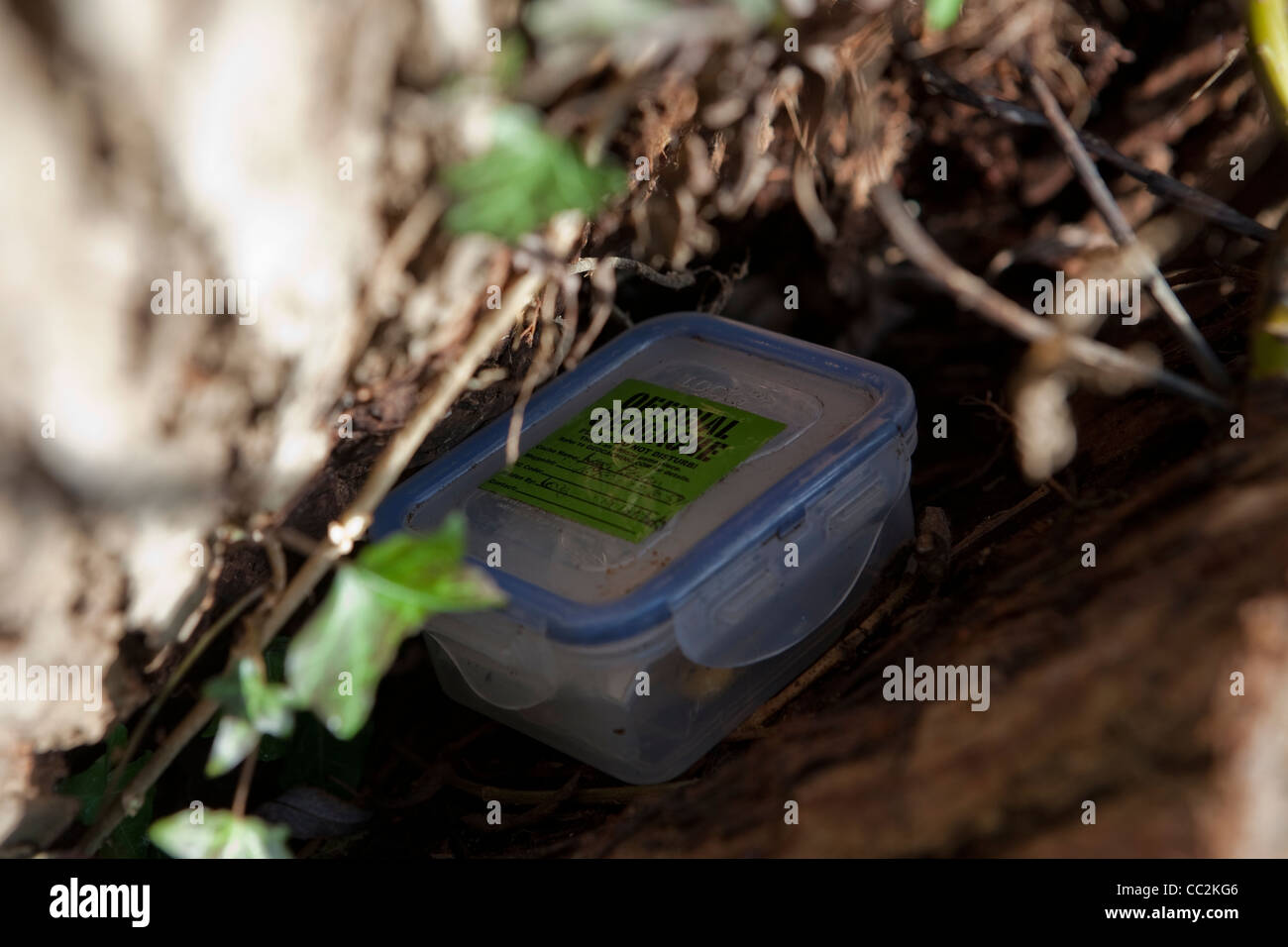 Small tupperware geocache box hidden in woodland environment - Stock Image