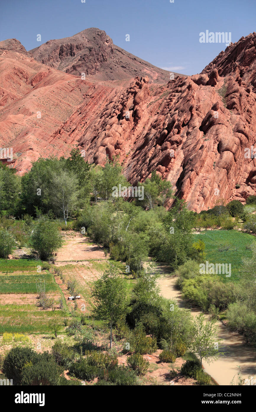 Green fields and red mountains characterize the landscape of Dades Gorge in Morocco - Stock Image