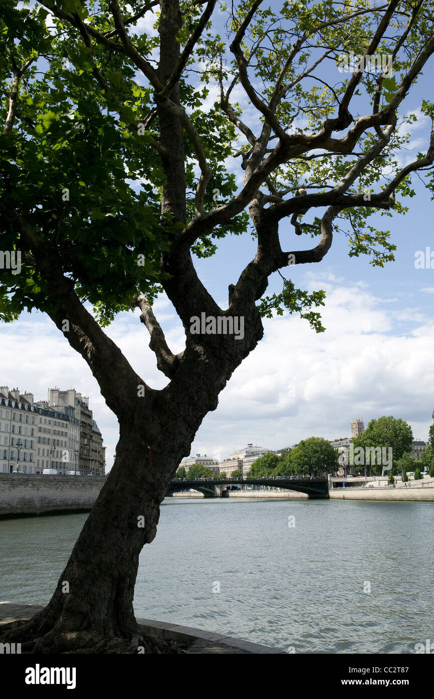 Tree with view of Pont d'Arcole from the end of ile Saint Louis, Paris. France - Stock Image