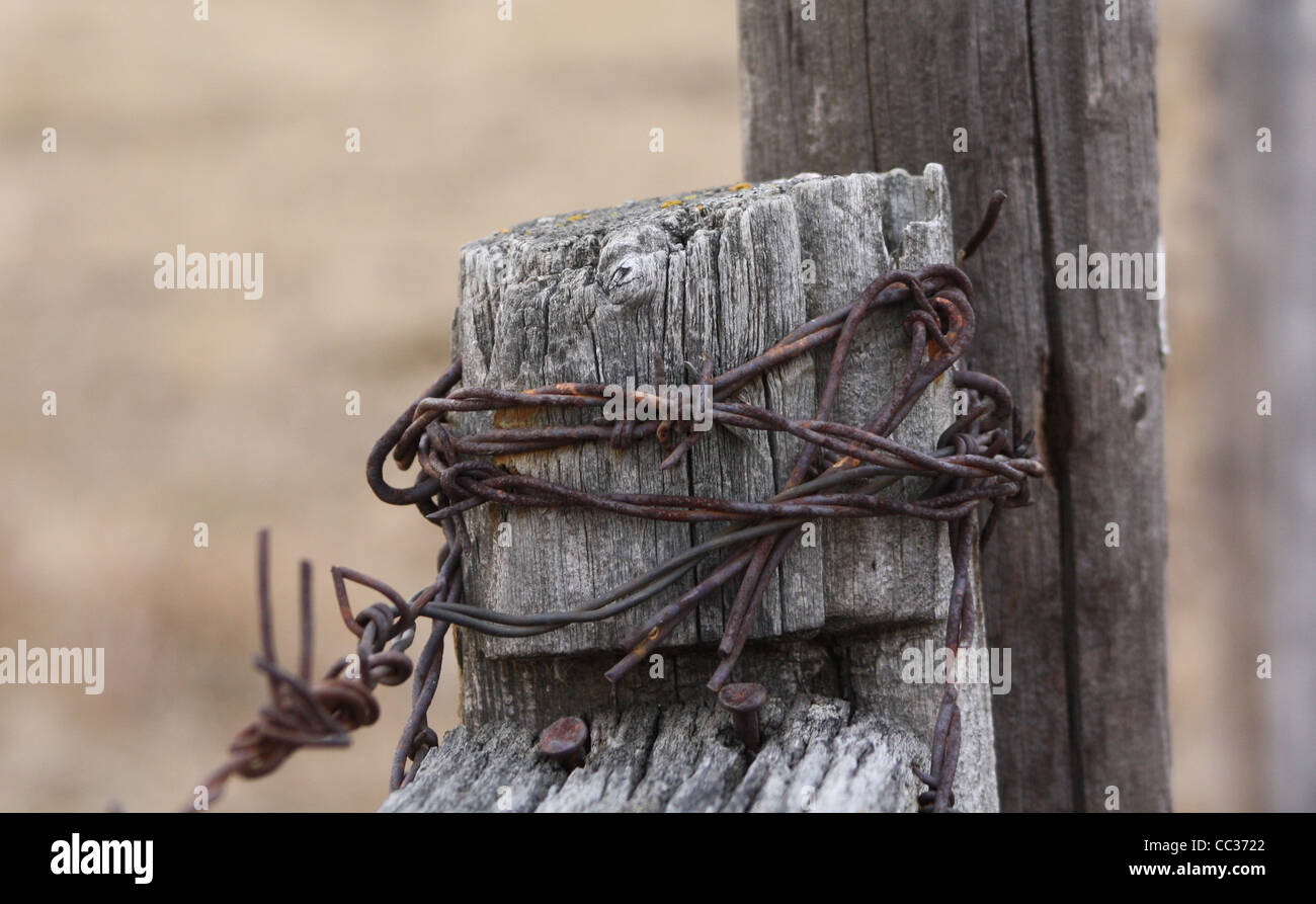 Rugged Fence Post Rusty Barbed Wire - Stock Image