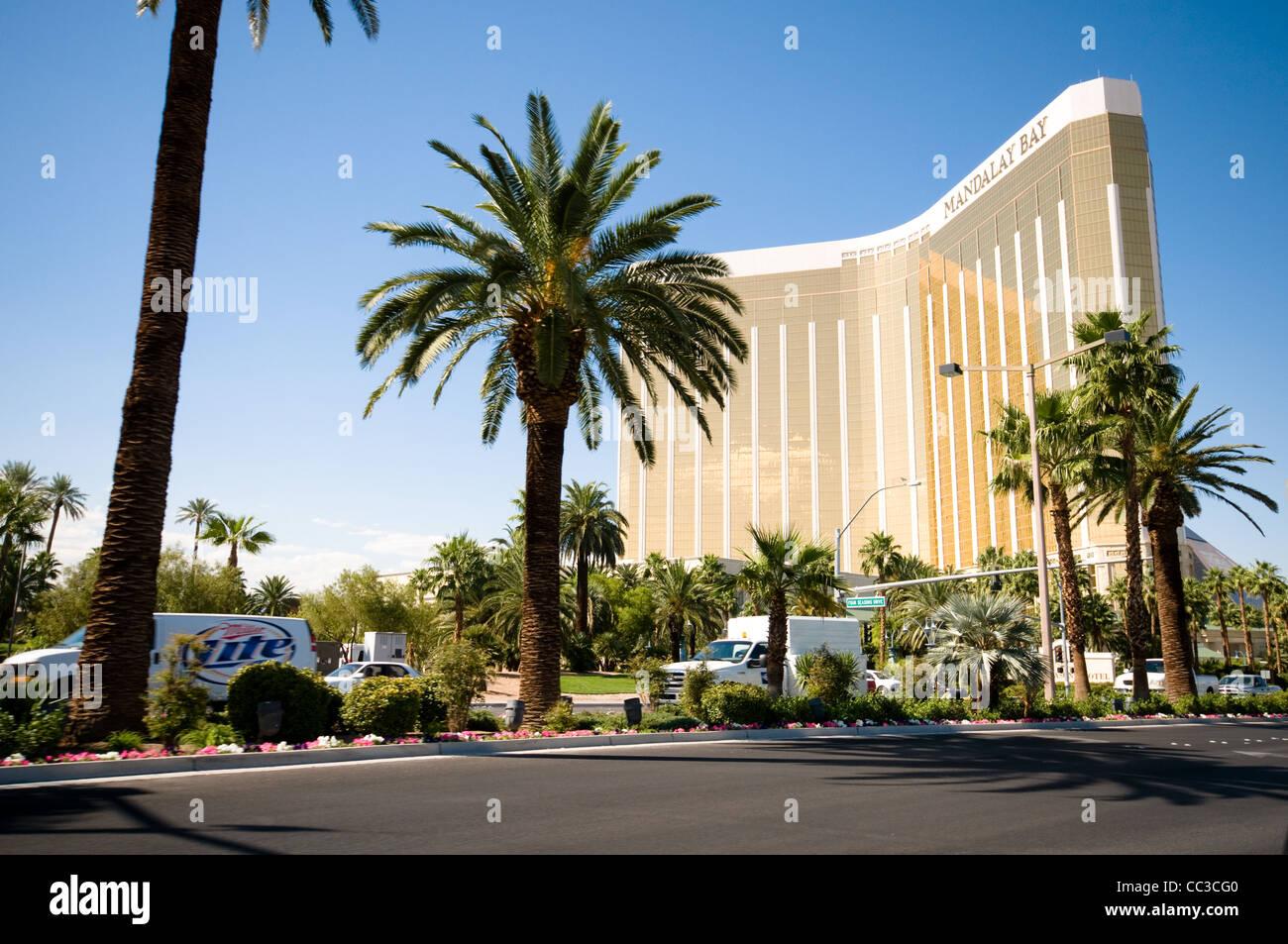 las vegas daytime palm trees stock photos las vegas daytime palm