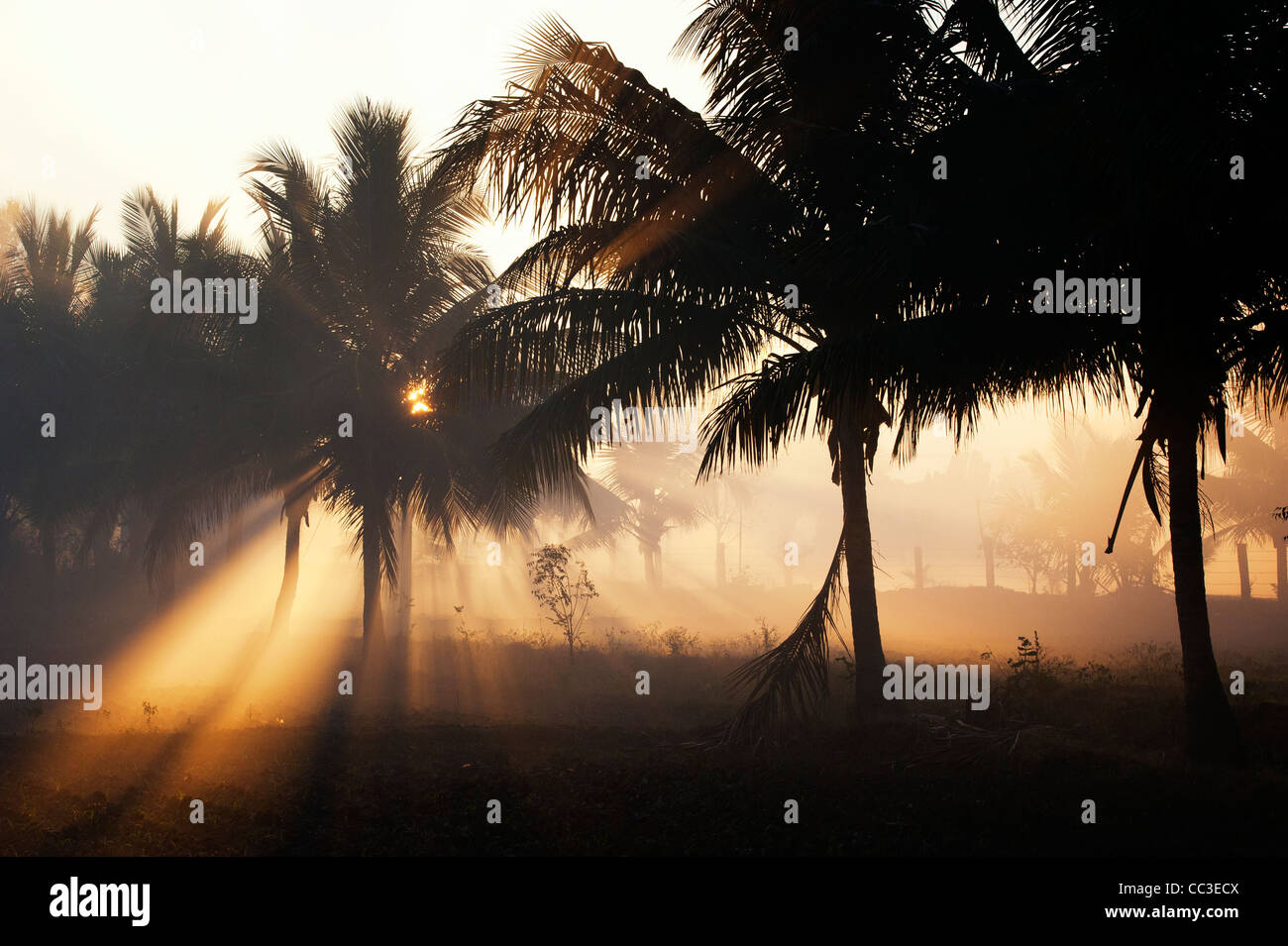 Smoke and palm trees silhouette in the indian countryside in the early morning sunlight. Andhra Pradesh, India Stock Photo