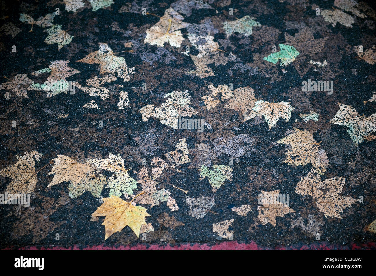 Autumn leaves pressed into tarmac by vehicles creating abstract patterns - Stock Image