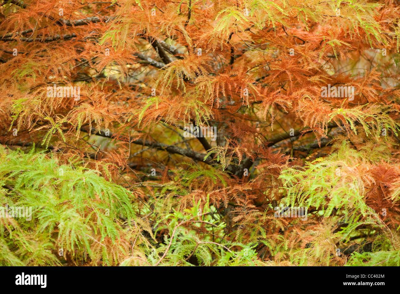 Cypress Gardens Stock Photos & Cypress Gardens Stock Images - Alamy