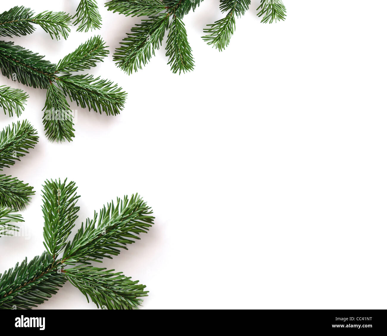 Twigs - Stock Image
