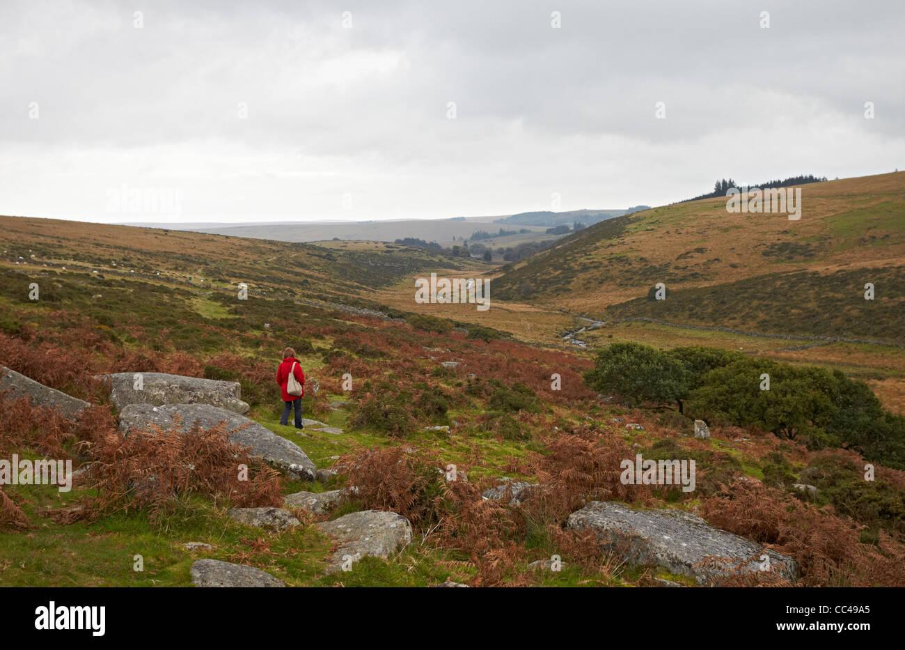 Dartmoor National Park walking near Wistman's Wood - Stock Image