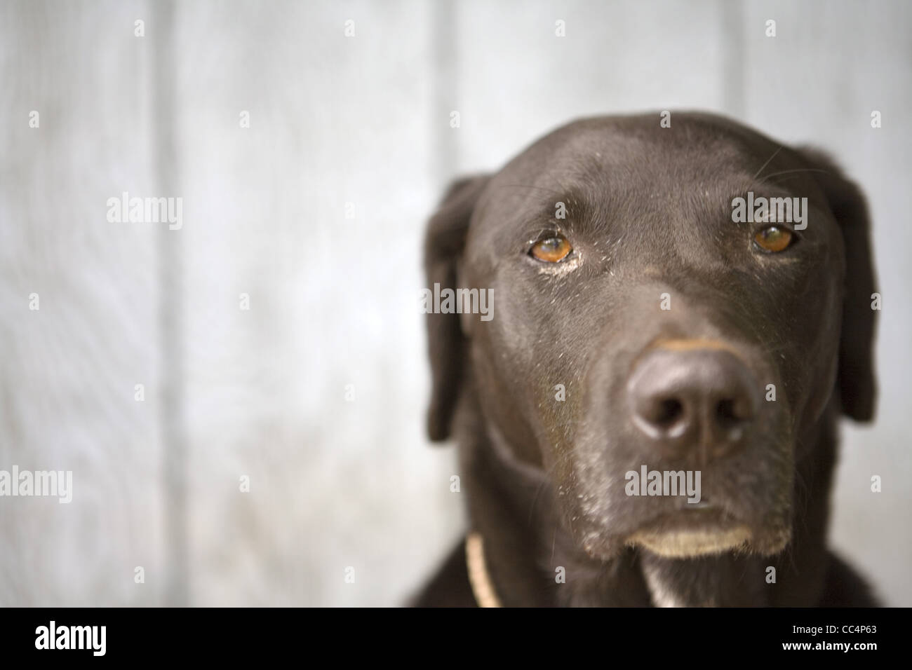 Dog Looking Solemn - Stock Image