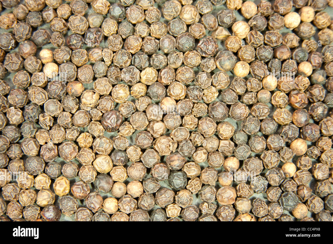 Background of whole peppercorns - Stock Image