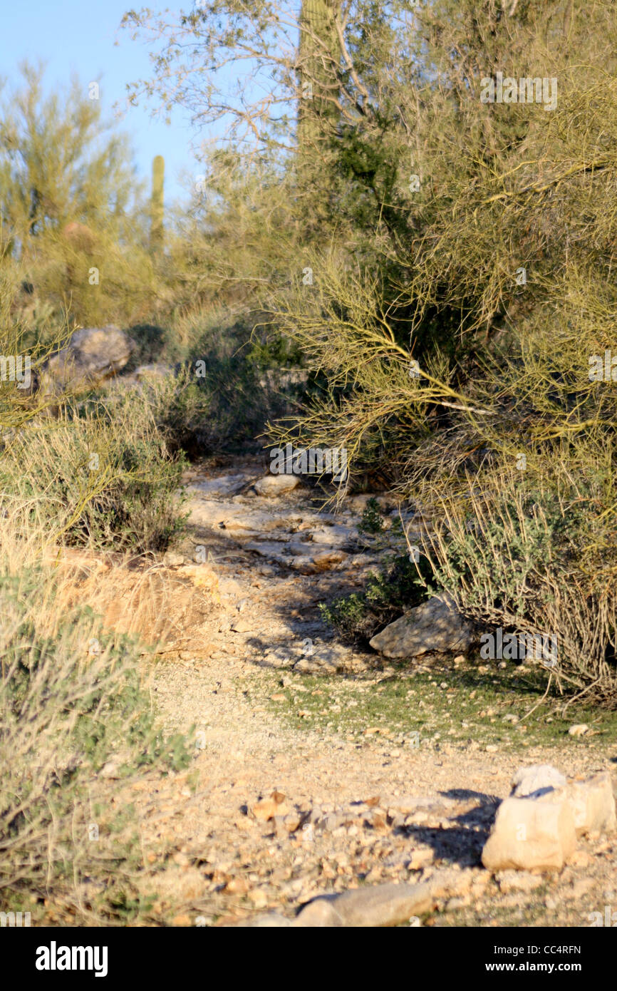 Desert Path or Trail - Stock Image