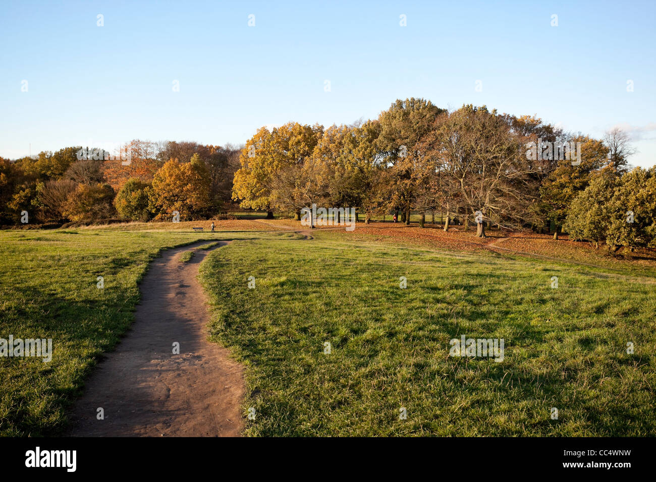 View from the opposite side of Parliament Hill, Hampstead heath, London, England, UK. - Stock Image
