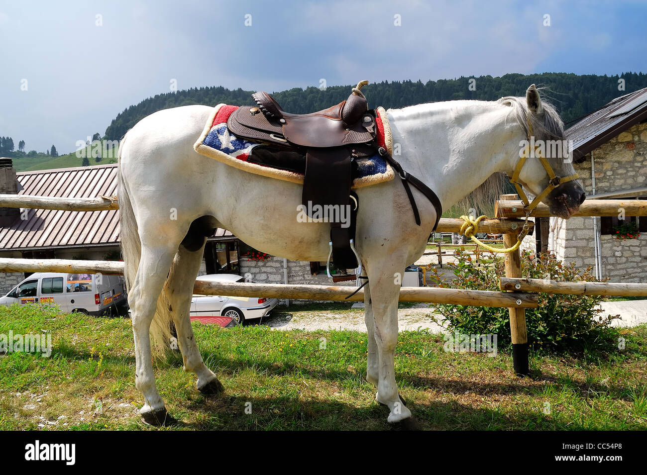 Mount Grappa Italy A White Horse With A Western Saddle Waits For Stock Photo Alamy