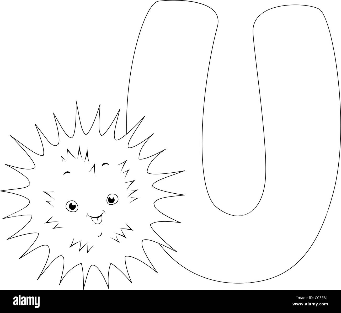 Sea Urchin Black and White Stock Photos & Images - Alamy