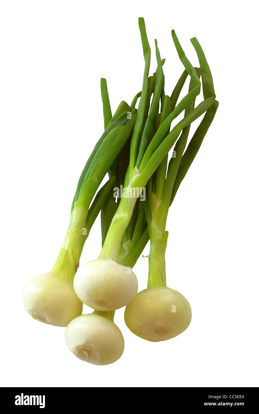 Purified green onions. - Stock Image