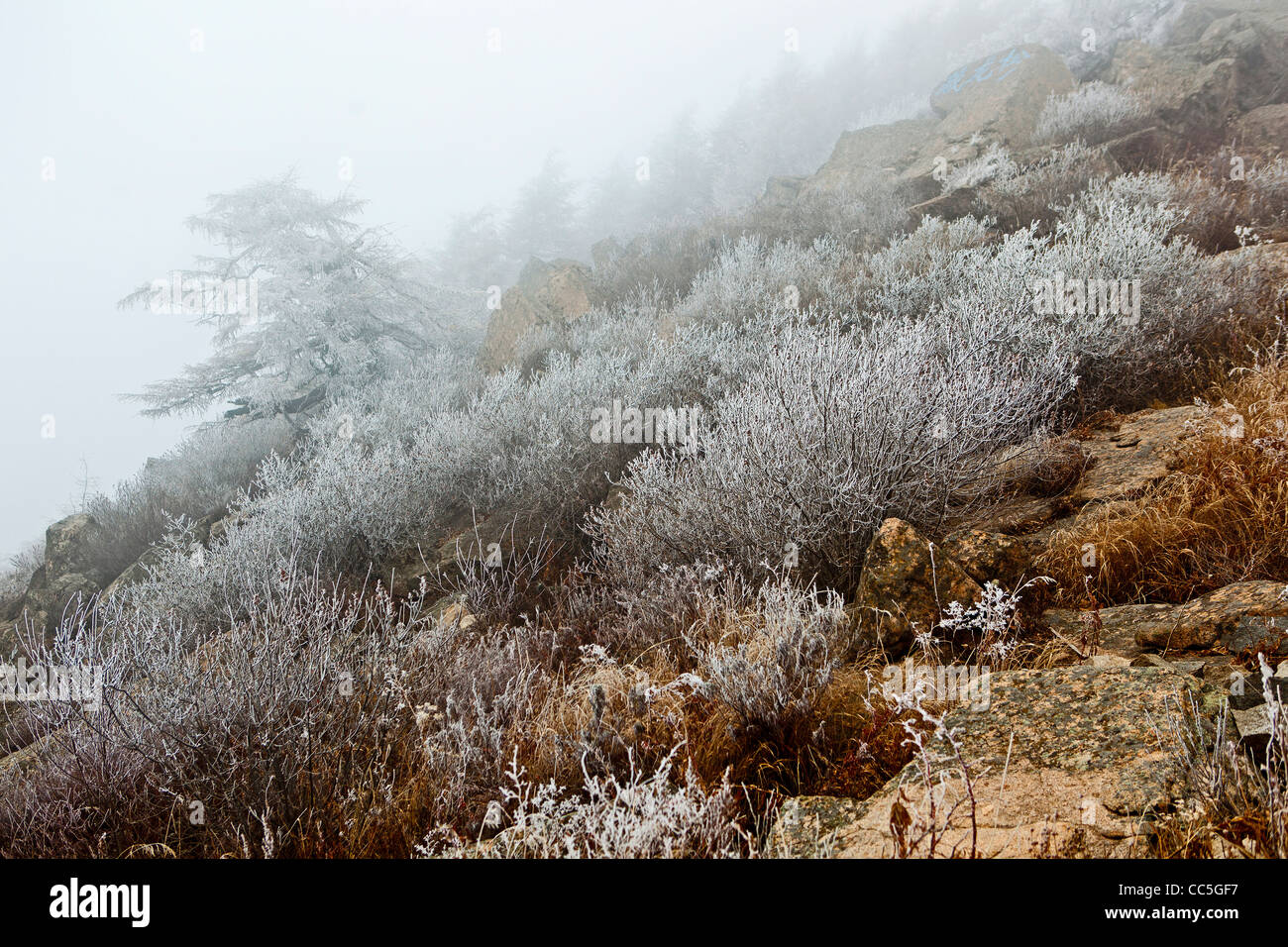 Ice-rimmed shrubbery, Wuling Mountain, Beijing, China - Stock Image