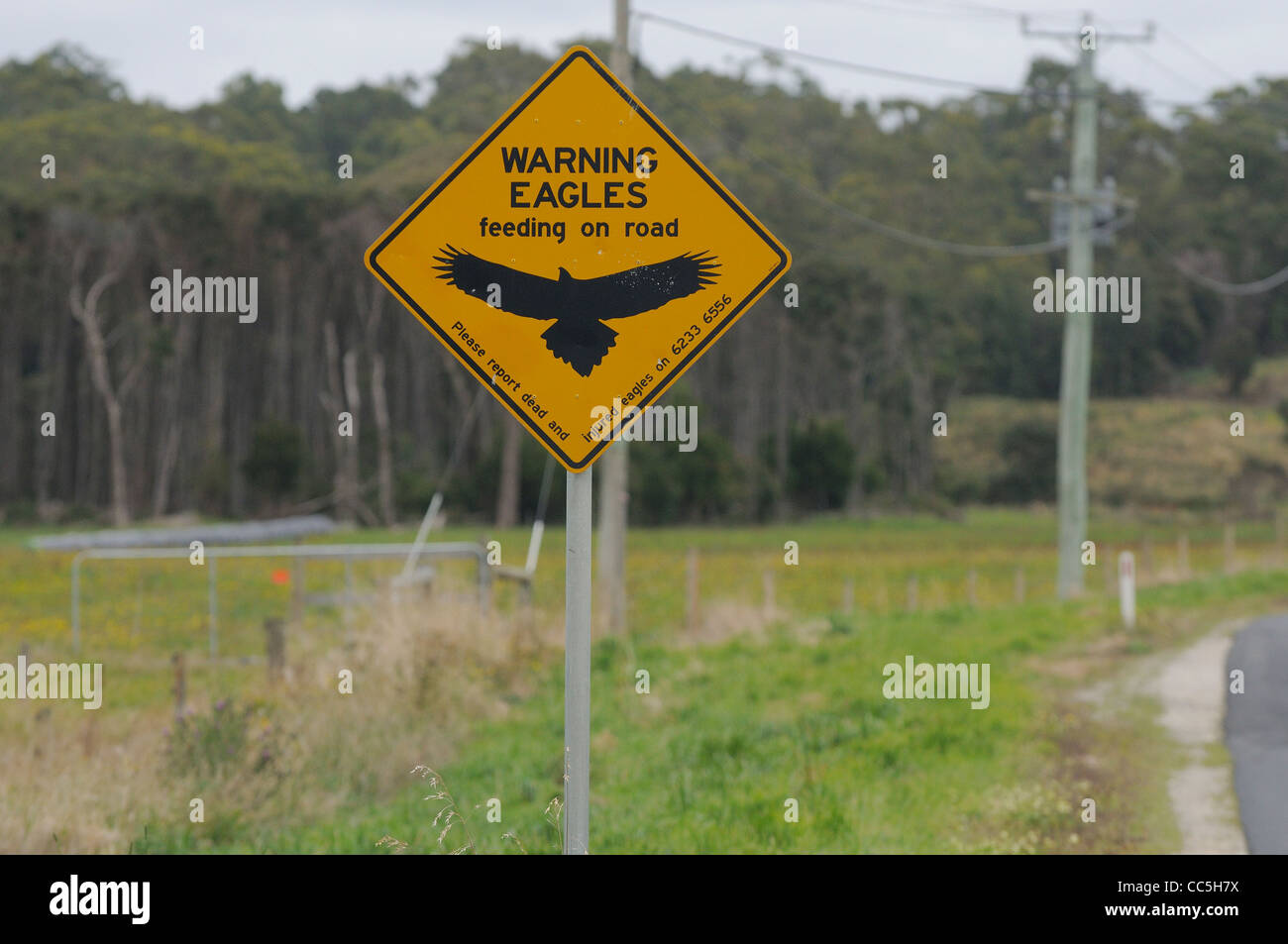 Wedge-tailed Eagle Aquila audax Road warning sign Photographed in Tasmania, Australia - Stock Image