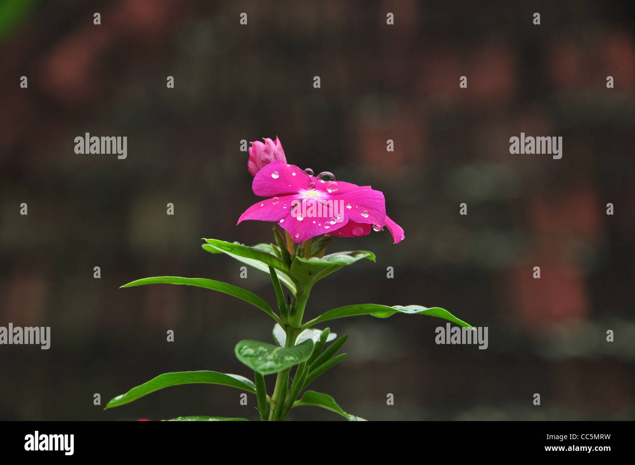 Dewdrops - Stock Image