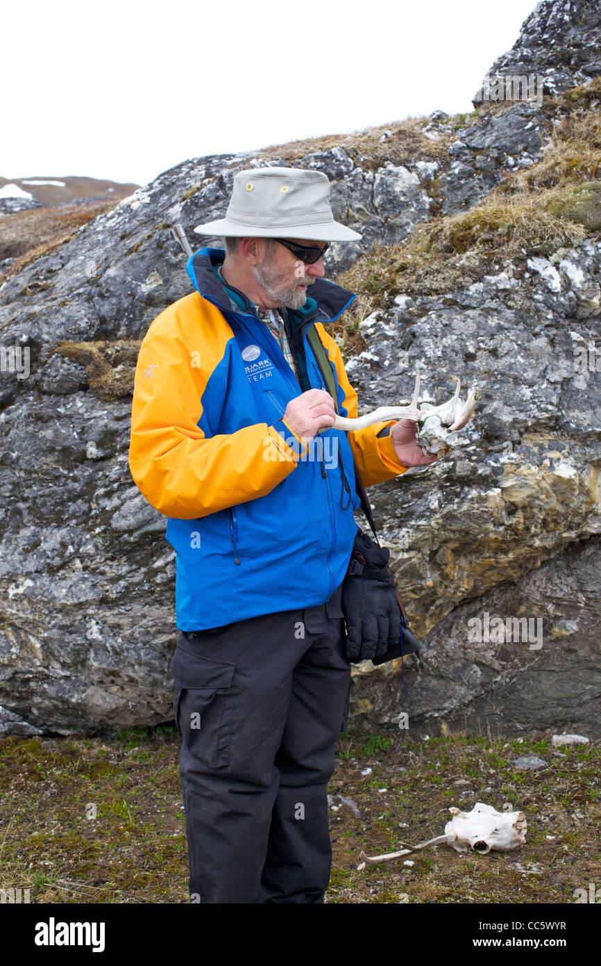 Polar arctic scientist, Ian Stirling, examining reindeer antlers, Alkehornet, Spitzbergen, Svalbard, Norway, Europe - Stock Image