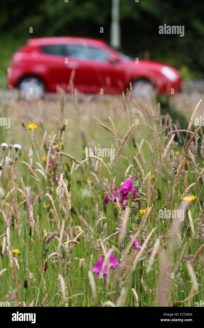 A petrol powered car driving past a meadow of wild flowers. Stock Photo