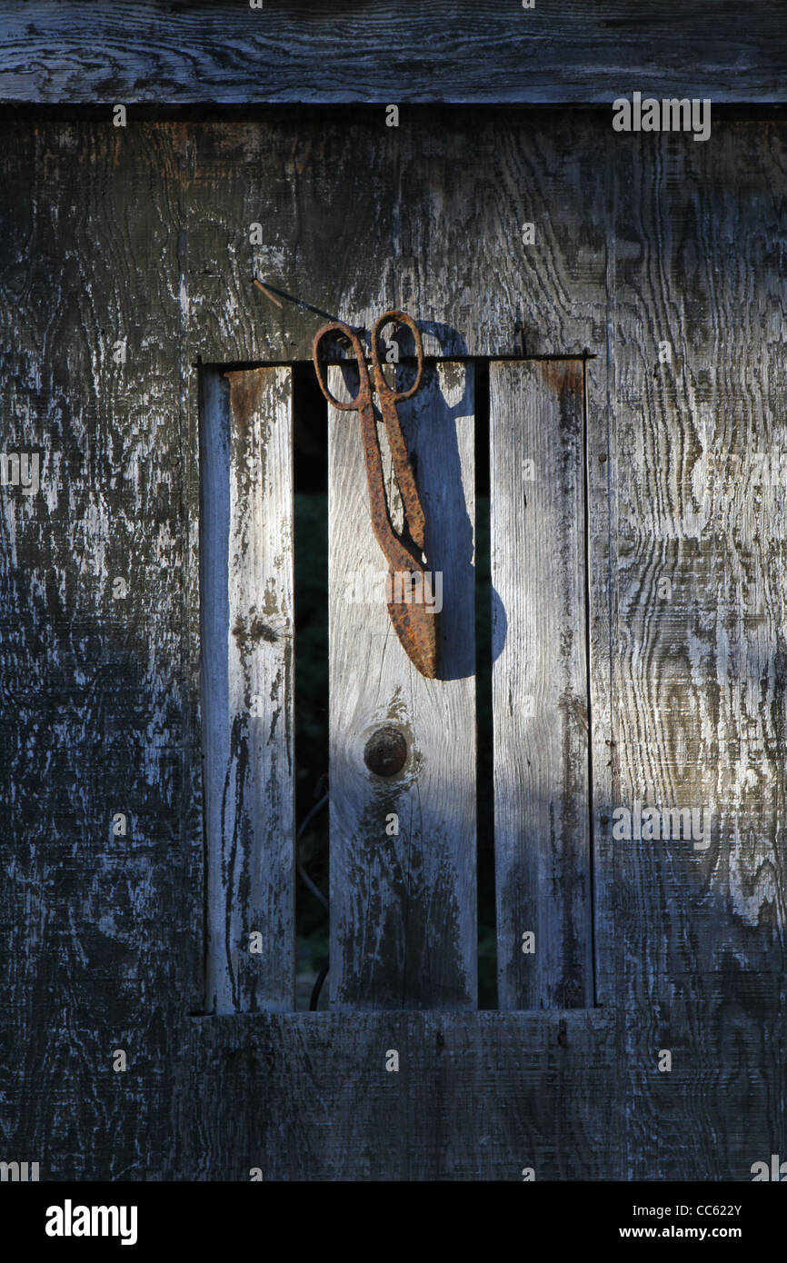 An old rusty tree trimmer hanging from an old shed. - Stock Image