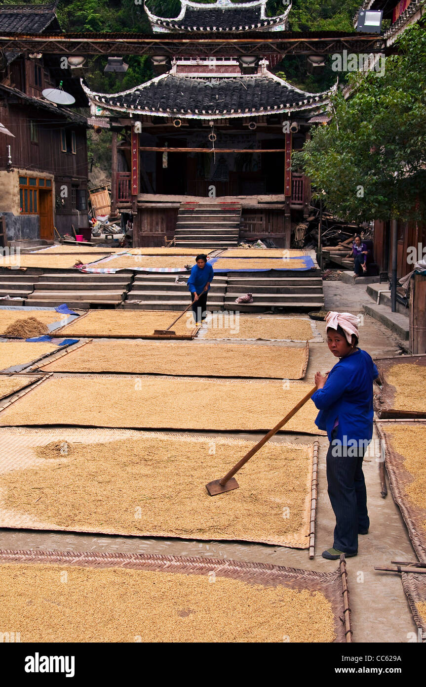 Rice harvest in a Dong village - Zhaoxing, Guizhou province (China) Stock Photo