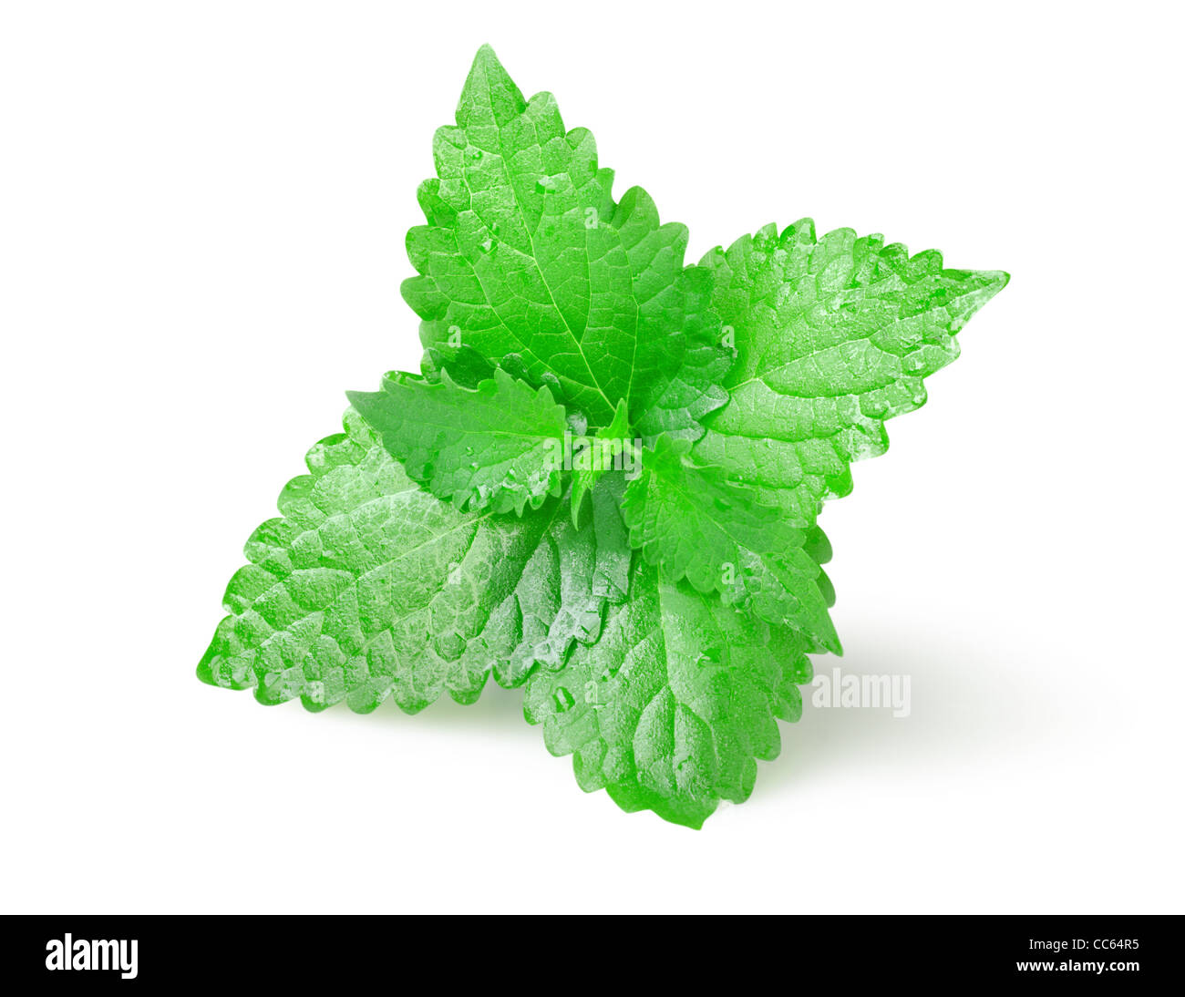 Green mint leaves isolated on white background - Stock Image