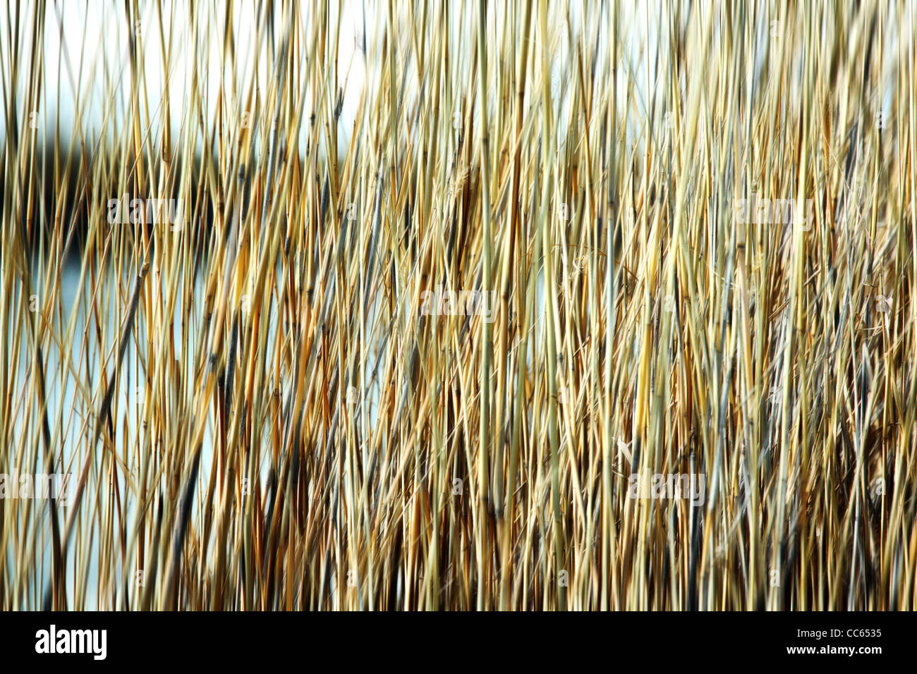 Blured reed background. - Stock Image
