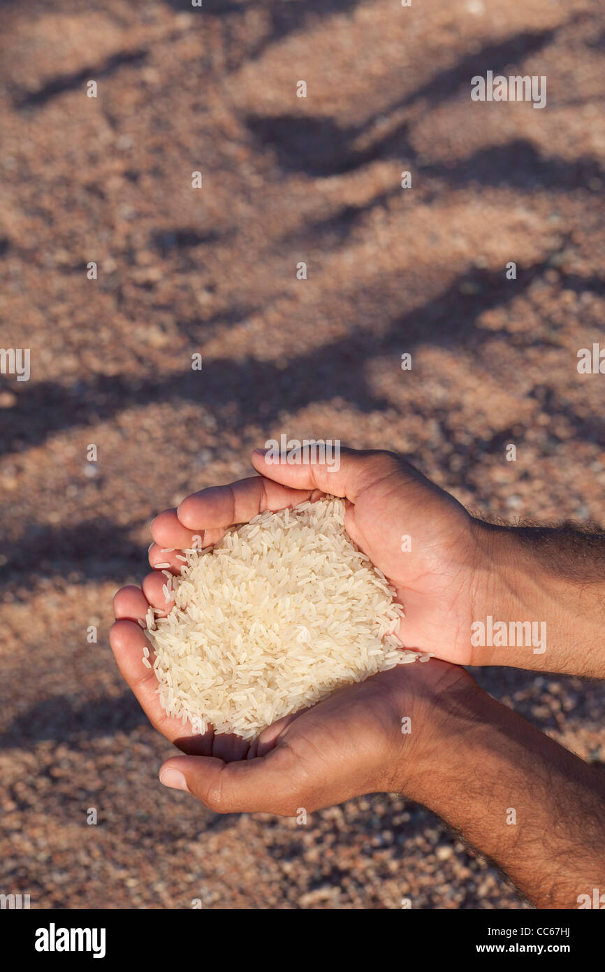 Hands and rice - Stock Image