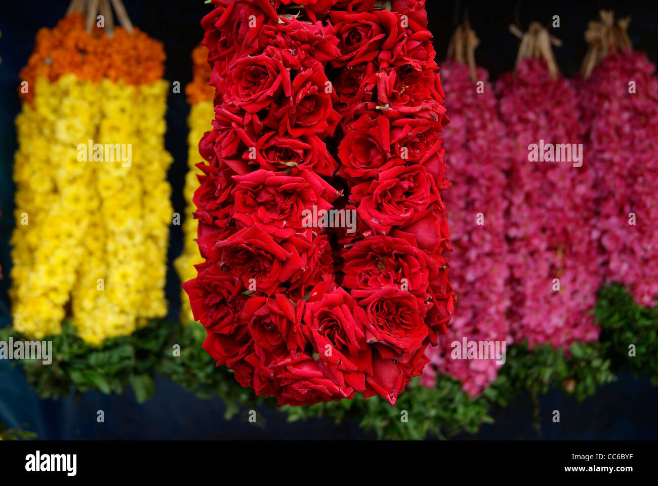 Specially designed rose garland ( Chained flower bouquet )(Poo Malai in Local Language) for decorating idol of Hindu - Stock Image
