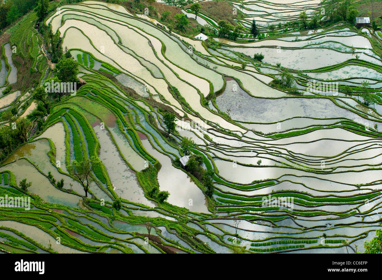A Bird's eye view of the beautiful rice terraces in Yanyang. - Stock Image