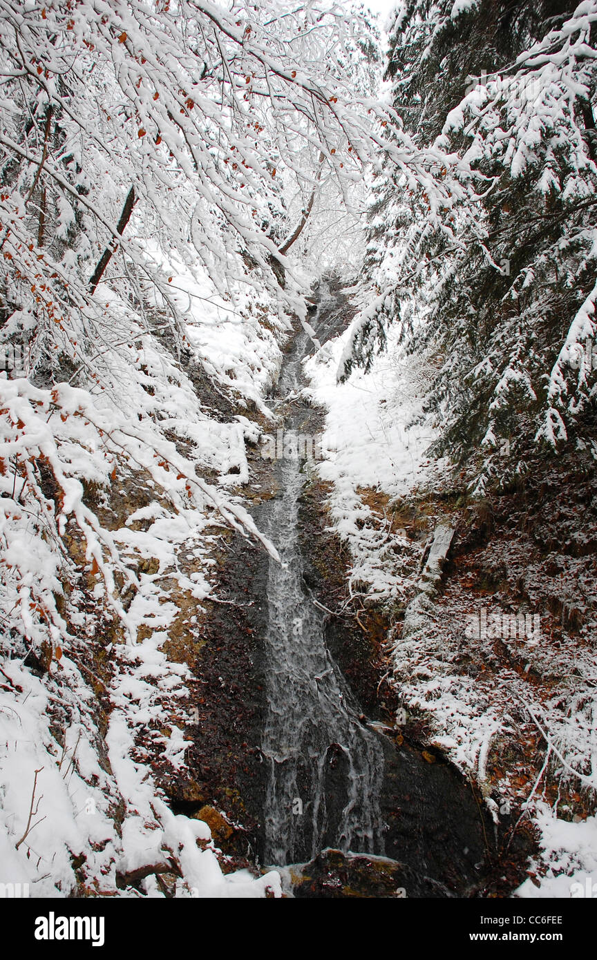 Stream throughing the forest in winter, Bavaria, Germany - Stock Image