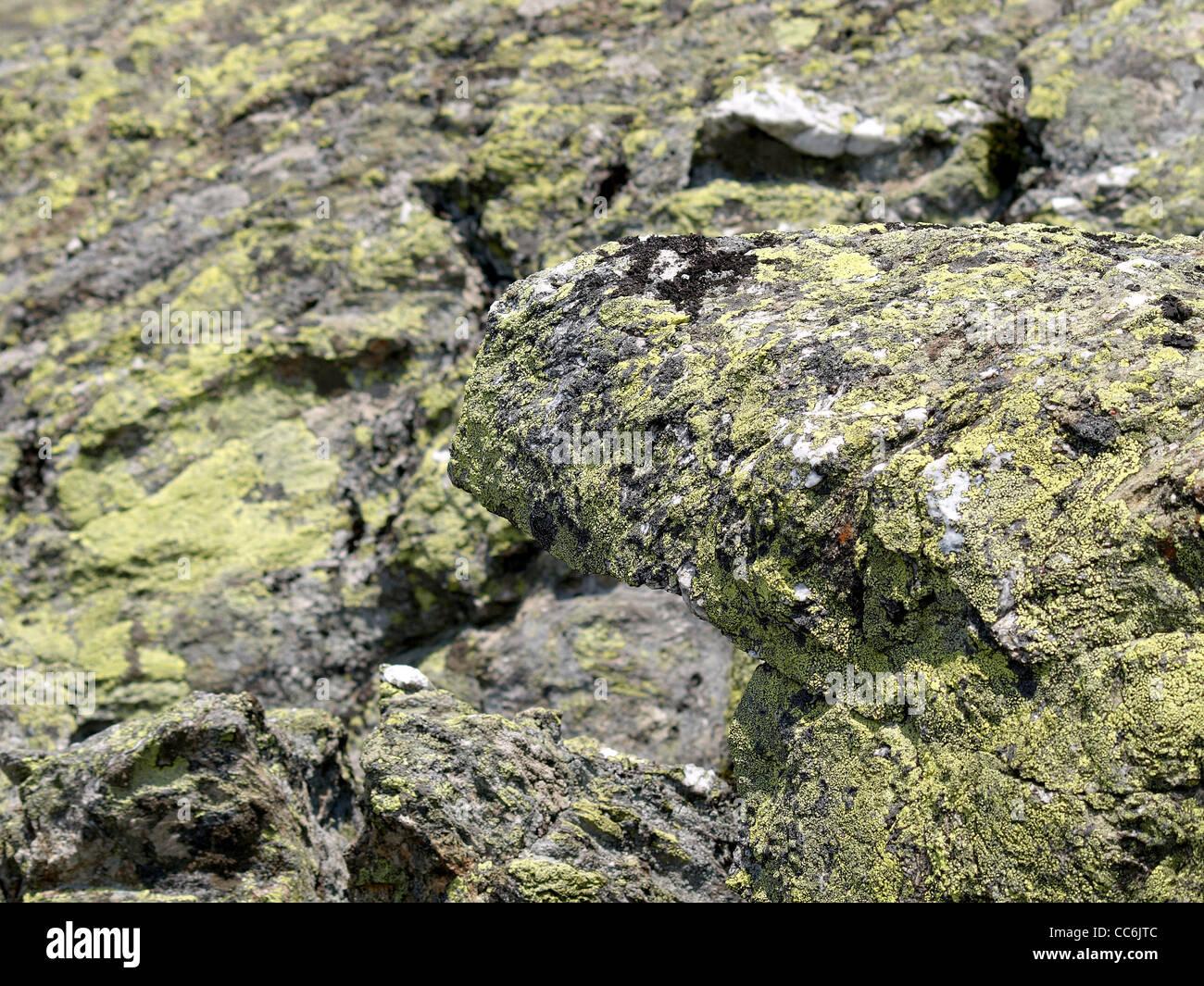 rock with lichen / Gestein mit Flechten - Stock Image