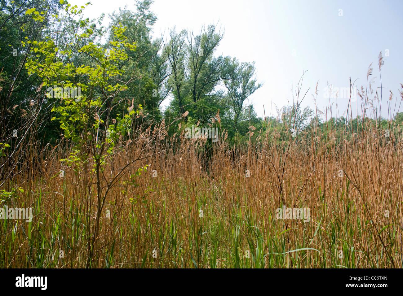 Österreich, Wien 22, Erholungsgebiet Lobau im Nationalpark Donau-Auen Stock Photo