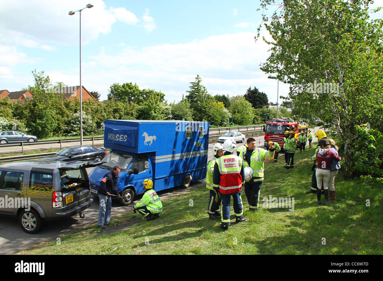 A horse rescue on the A1 in Cambridgeshire after the horse's leg became trapped while in transit. - Stock Image