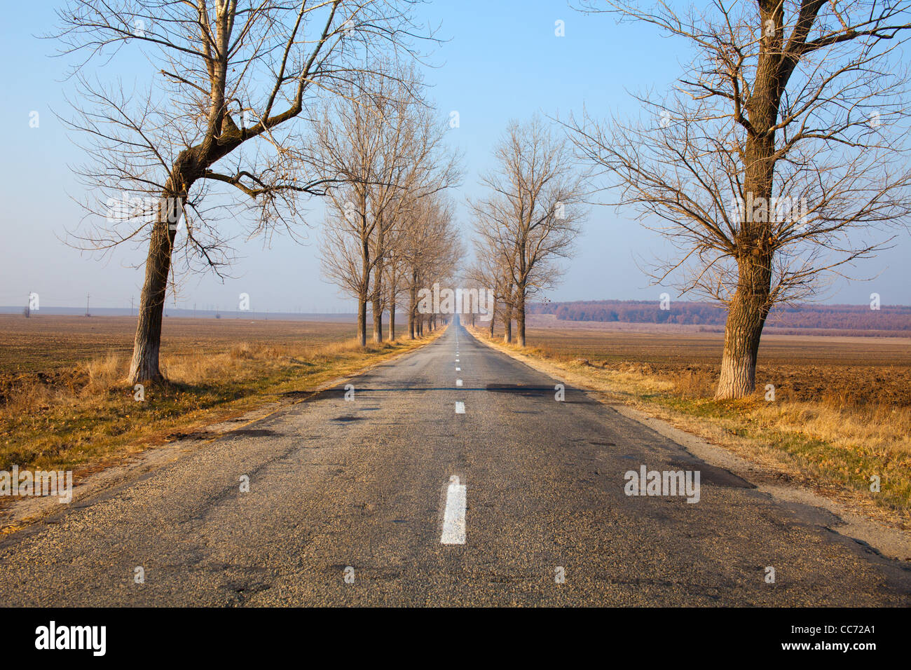 Landscape with straight empty road between poplar trees Stock Photo