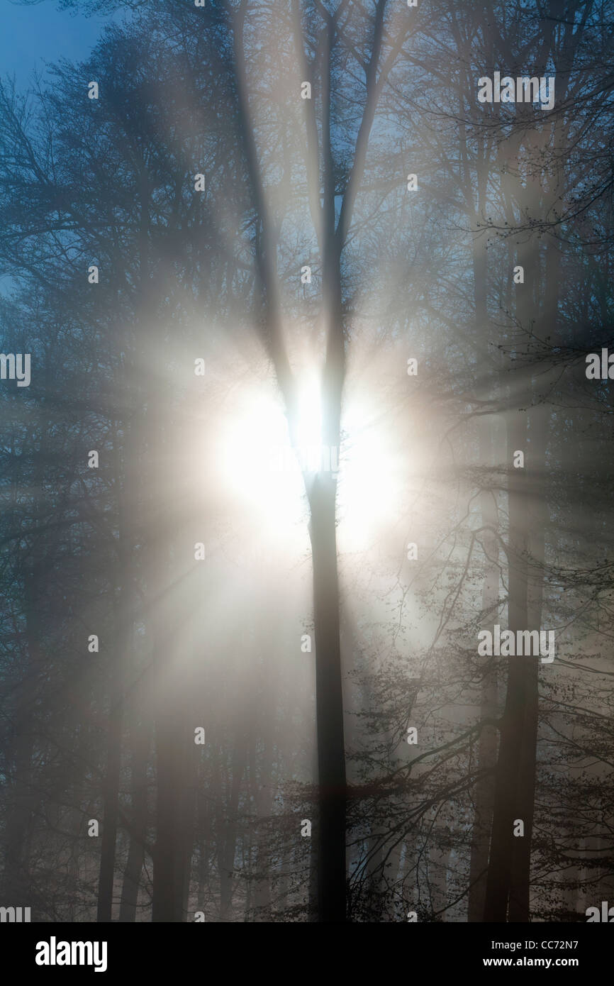 Autumn Morning Sunshine and Mist , Shining through Trees in Woodland, Hessen, Germany - Stock Image
